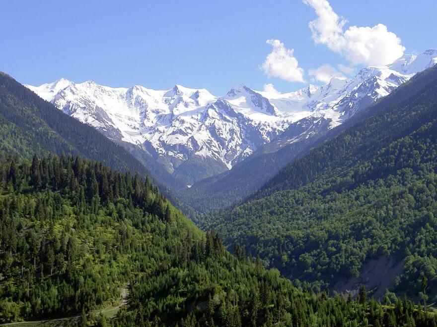Vittfarne-Georgien